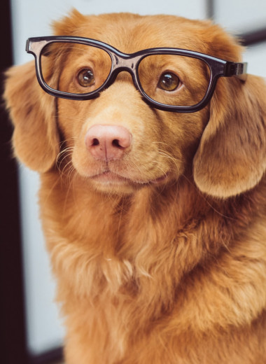 Собака страшная. История о говорящем животном