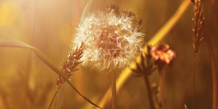 Фотографии золотой осени