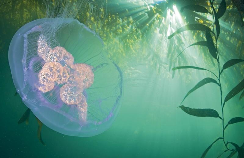 Сохраним подводные богатства