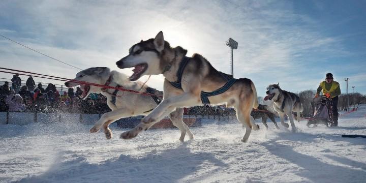 Бегущие по снегам