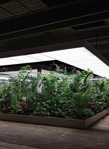 Растения — новые хедлайнеры