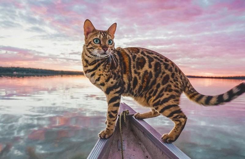 У кошки блоги!