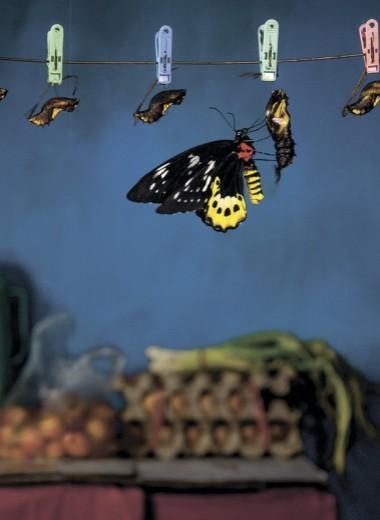 Охотники за бабочками