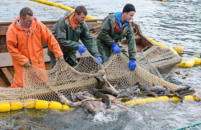 Рыбный рынок снова штормит