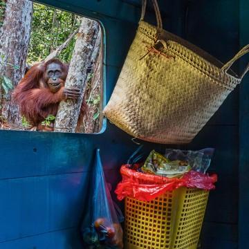 Семейный визит на Борнео