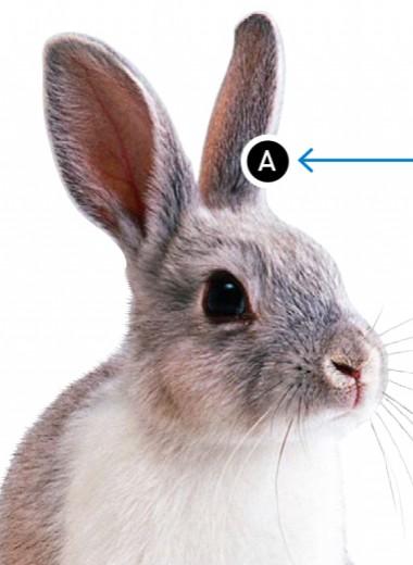 Что общего у кроликов и вулканов?