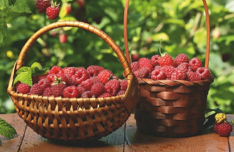 Какое лето без малины