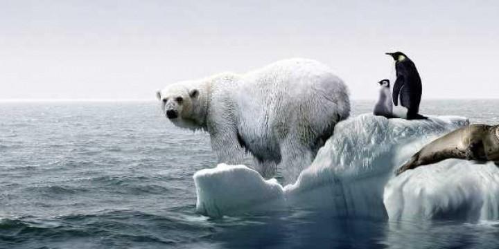 Антарктида смылась