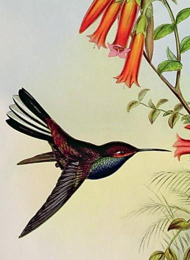 Сладкоголосая птица юности