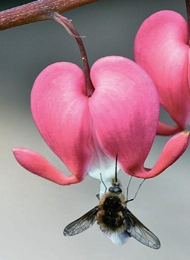 Цветы и пчёлы