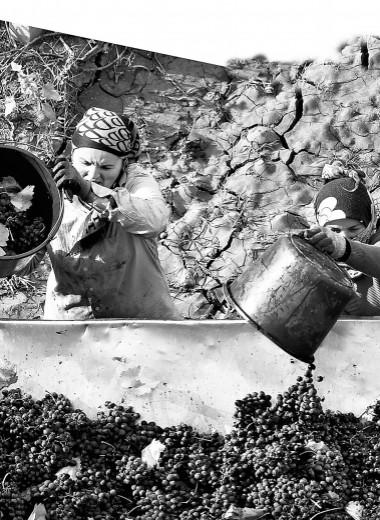Крым на этикетке