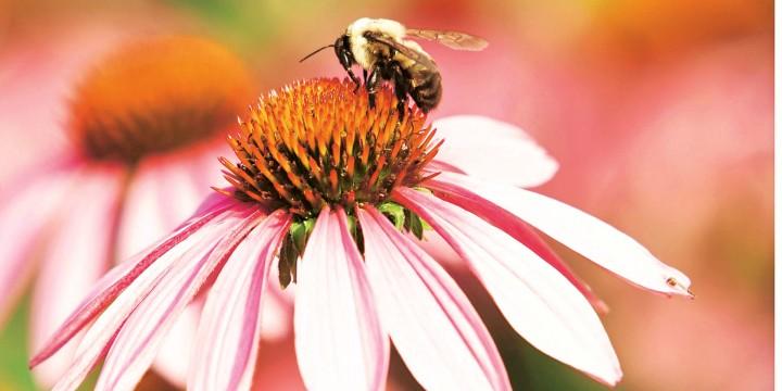 Не липовый мед