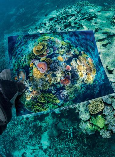 Спасение рифов