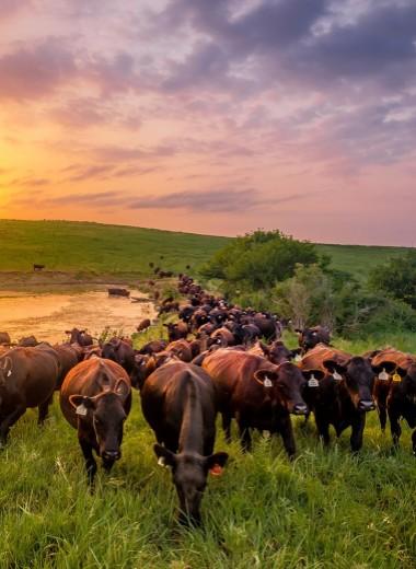 Веганы против мяса: крайней станет Земля?