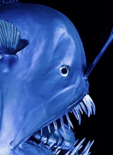 Чертова дюжина: 12 океанских монстров
