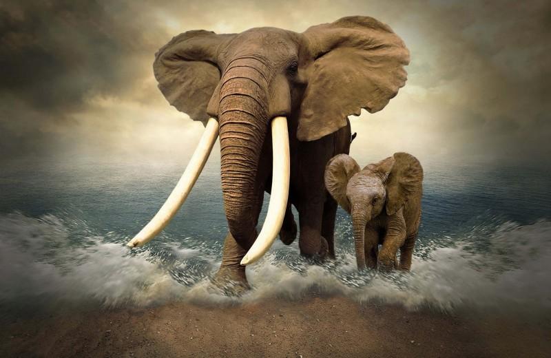 Инопланетные слоны — какие они?