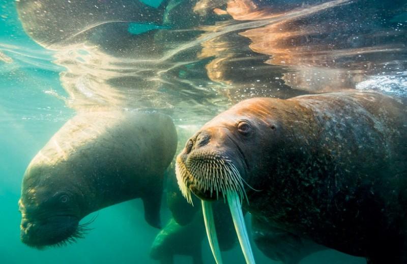 Водная среда под угрозой: как спасти океан