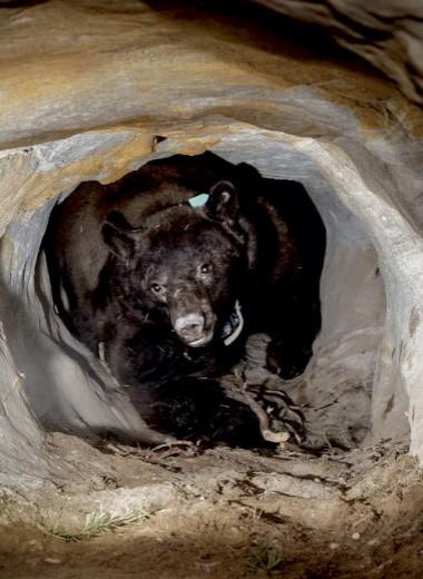 Не разбуди медведя