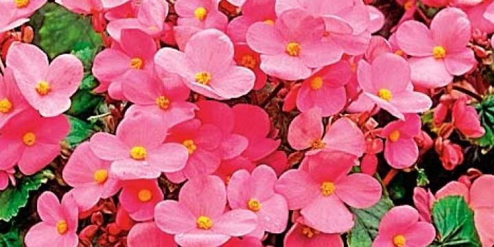 Цветут круглый год