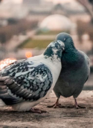 Осмелиться на близость