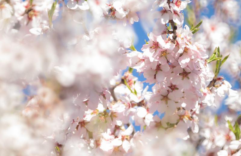 Весне – дорогу!