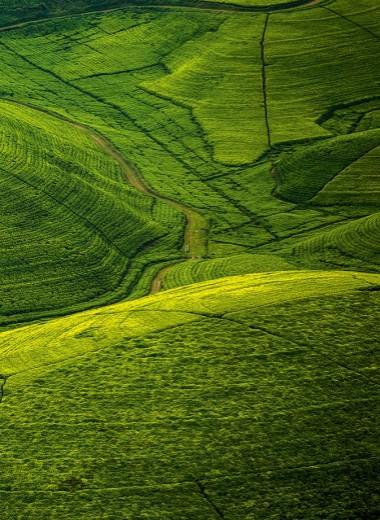Африканская Тоскана