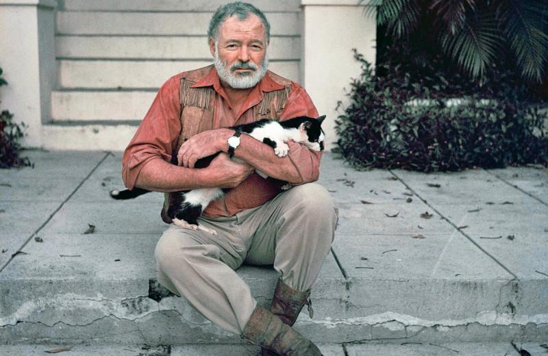Портрет писателя с котиком