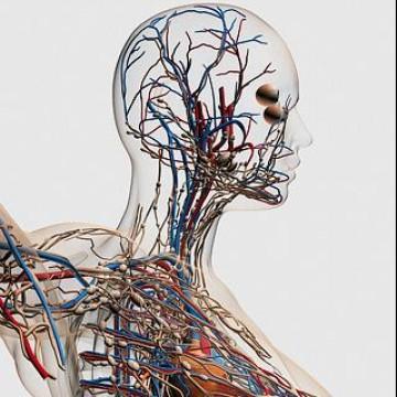 Наука | Медицина