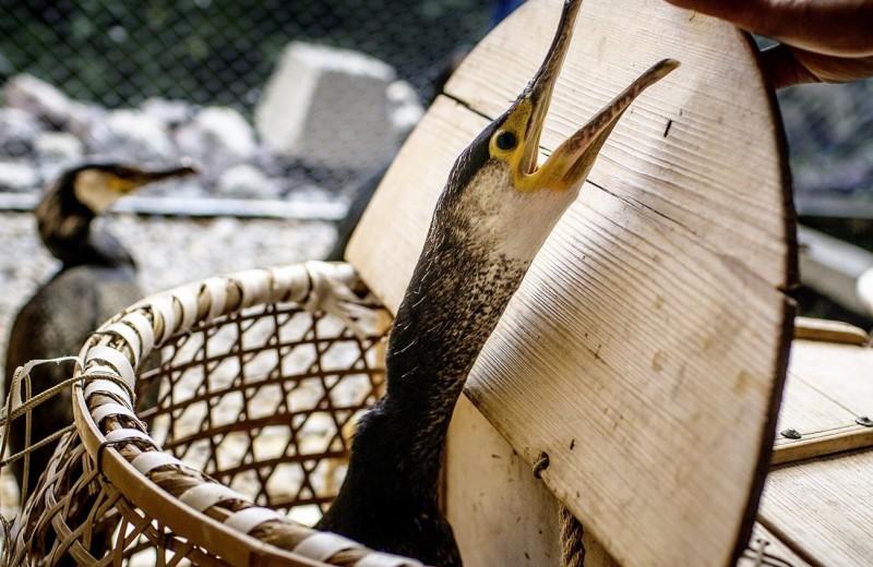 Япония: У мацури