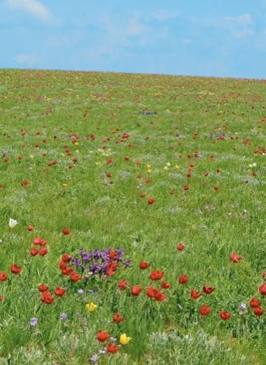 Весна в заповедной степи