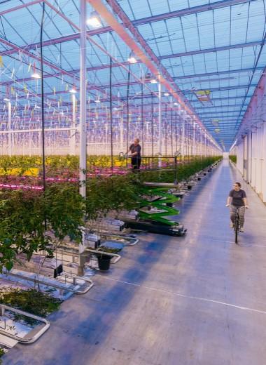 Изобретатели урожая