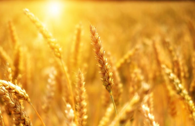 Пандемия не помеха агробизнесу