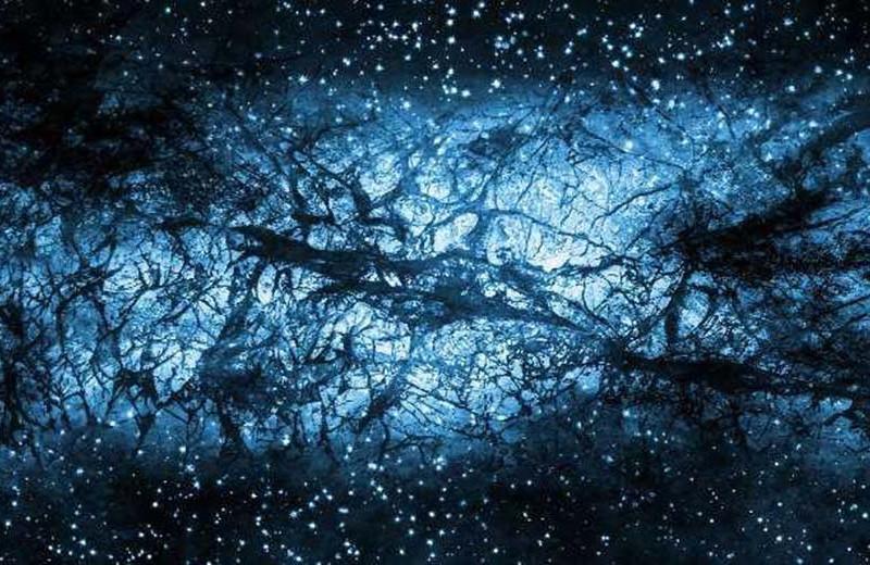 Звезды в сети