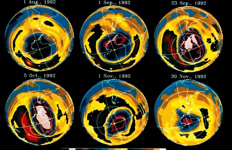 Ухоженный озон
