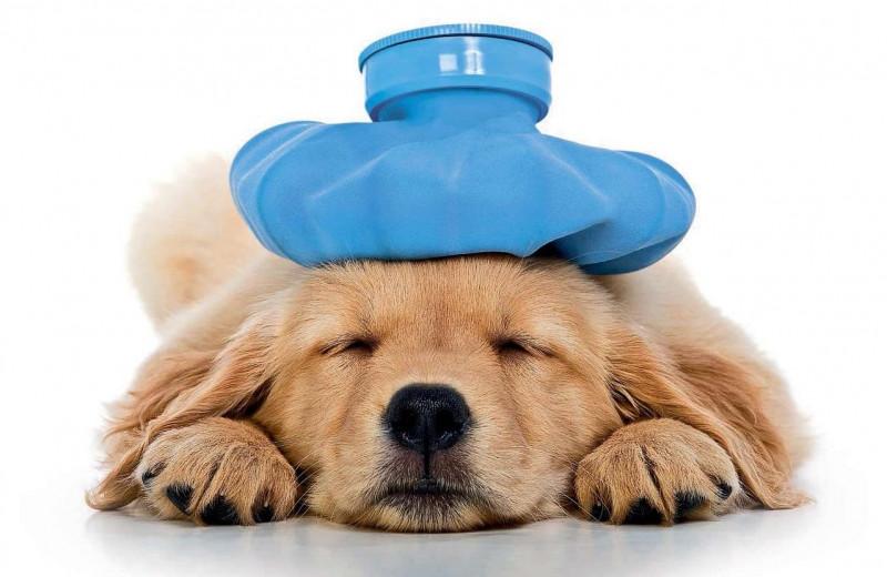 Спроси себя, как часто у тебя болит голова?