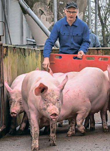 Таиландцы консолидируют российскую свинину
