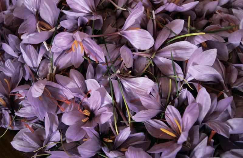 Вкус цвета и аромата