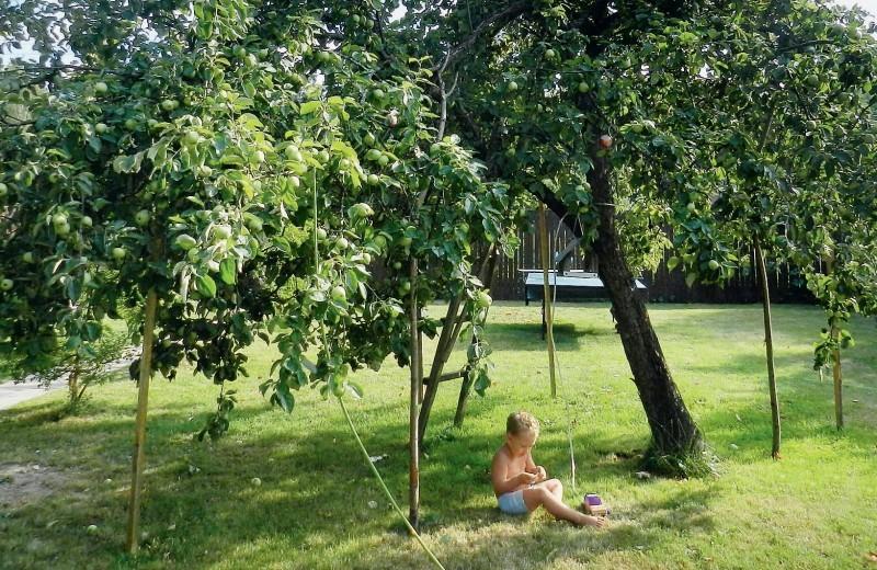 Как защитить сад от вредителей и болезней