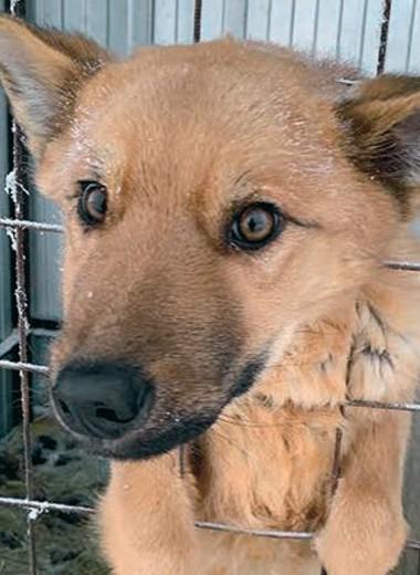 Якутия в эпицентре «собачьего» скандала