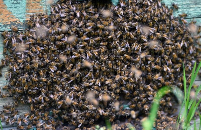 Пчеловечество в опасности