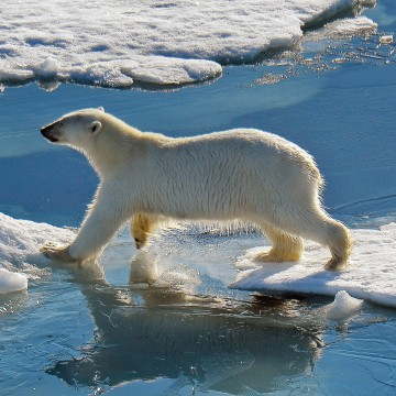 Арктика открывается