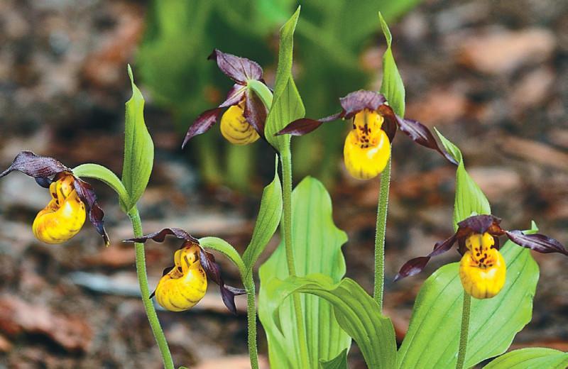 Орхидеи из пробирки