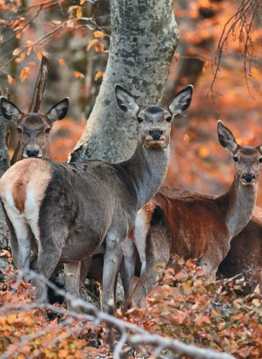 В видоискателе — животный мир