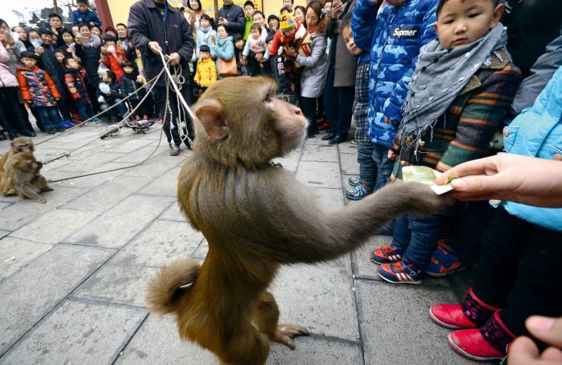 «В потреблении мы недалеко ушли от обезьян»