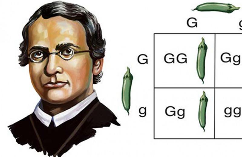 Гений генетики