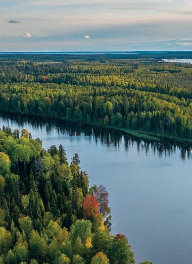 Леса посчитаем по-новому