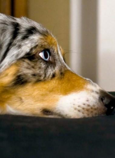 «Собачник» — это диагноз