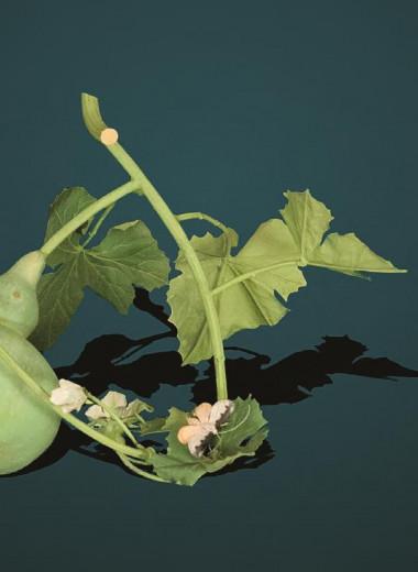 Железный гербарий Кармен Алмон