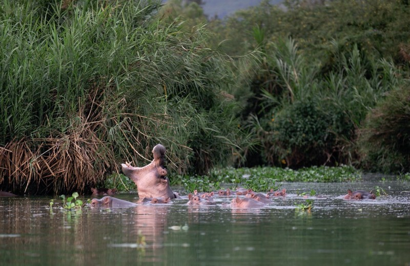 Кругосветное путешествие Алексея Камерзанова. Уганда