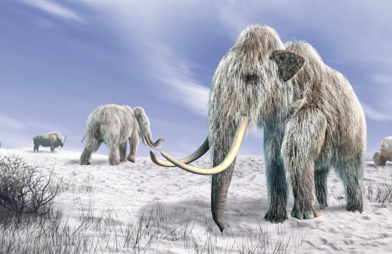 Эволюционная баллистика мамонтов: от хоботных до голоценового финала